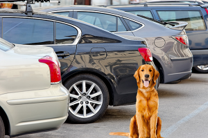 Dogs Dont Bark at Parked Cars